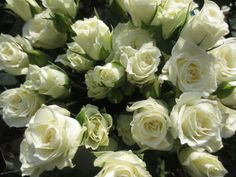Viviane! Spray Roses, Wedding Events, Claire, Flowers, Plants, Flora, Royal Icing Flowers, Plant, Florals