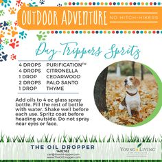 Doggie DIY! Naturally. Glass Spray Bottle, Oil Bottle, Young Living Oils, Young Living Essential Oils, Essential Oils Dogs, Citronella Essential Oil, Pet Sitting Services, Coconut Oil For Dogs, Oils For Dogs