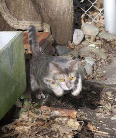 QonoS vedi veni vici Cats, Animals, Gatos, Animales, Animaux, Kitty, Cat, Cats And Kittens, Animal