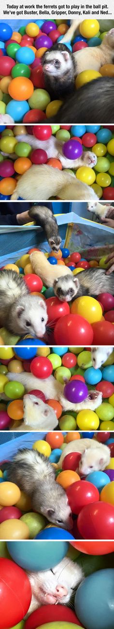 My ferret would love this!!