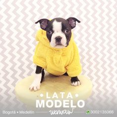Wawaw Ropa para perros y gatos en Colombia #Cat #Dog Pet clothes accesories
