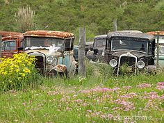 Vintage cars abandoned on the junkyard