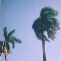 (freestyle) by Abrahamblue. on SoundCloud Music, Plants, Musica, Musik, Flora, Muziek, Music Activities, Plant, Songs