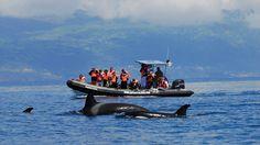 Azoren Reisen - Wandern und Erholen im Triangulo Boat, Recovery, Hiking, Dinghy, Boating, Boats