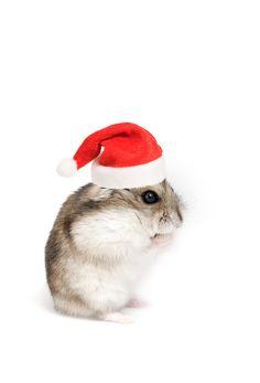 Santa hamster!  @ hamster boy aka Clayton Russelburg