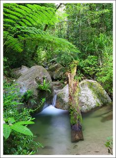 The Perfect Pool. Mossman Gorge, Daintree Rainforest, Queensland. World Heritage Site, where the lush rainforest grows right down to the sea.