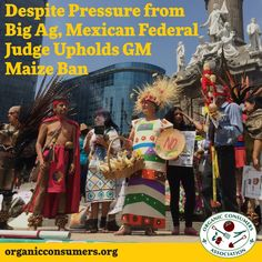 Mexico's ban on genetically modified corn survives another appeal by the Biotech Giants! #Mexico #Maiz #GMO #MonsantoMakesUsSick