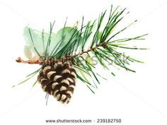 Pine Cone On Branch Hand Painted Watercolor Illustration on white background