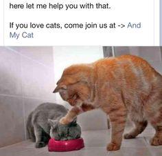 Esto es un ejemplo de lo que los gatos entienden por una broma.