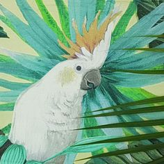 Parrot, Bird, Animals, Baby Sheets, Parrot Bird, Animales, Animaux, Birds, Animal