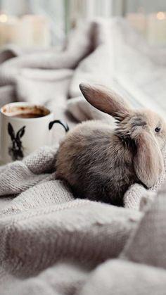 chocolat chaud et lapin d'hiver