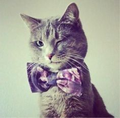 Cat in a bowtie. Cuter than I thought it would be...