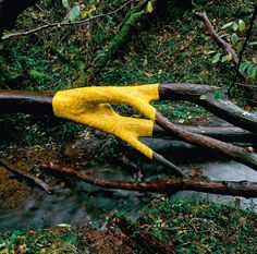 Andy Goldsworthy:::  Wet, yellow elm leaves stick to a smooth, fallen elm tree in Dumfriesshire. (November, 2011)