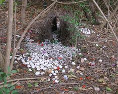 bowerbird's nest If I were a bird I would so be a bowerbird!