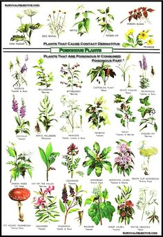 Poisonous plants. Very useful for the next few weeks.