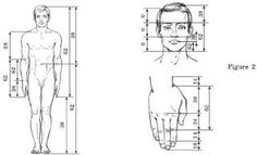 According to Vitruvius, the distance from fingertip to fingertip should be the same as that from head to toe. The sacred mean can be seen in the ratios of body parts. In the arm of the Vitruvian man for example, we can see that the ratio of A is to B is the same as that of B to C. The same rules apply throughout the human body.