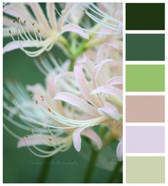 Candice Smith Photography: Color Palettes Part III