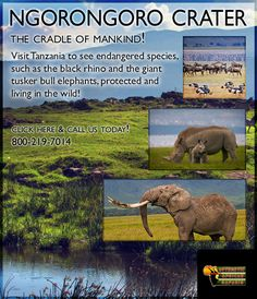 7 best tanzania images tanzania, addis ababa, adorable animalsthe ebola hype safari travelers safe to visit tanzania (east africa)