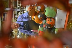Gary Morton selecting winners in best the pumpkin decoration competition organised by Morton's for kids from local schools