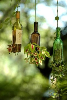 Wine plants- fantastic!