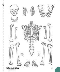 Skeletal System Model cut outs for children, kids