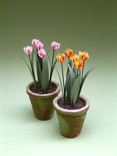 If you are making a Spring scene all these flowers bloom at that time of year.       Alliums       Anemones       Auriculas       Bi-Coloure...