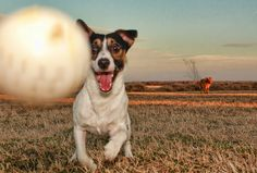How to Solve Practically Any Annoying Dog Behavior Problem | for whenever i get a puppy!