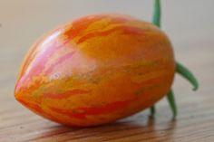 Sunset Falls tomato Types Of Tomatoes, Beautiful Fruits, Fruit And Veg, Garden Plants, Mango, Gardens, Sunset, Vegetables, Food