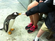 Penguin Encounters h