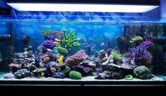 Pretty saltwater aquarium
