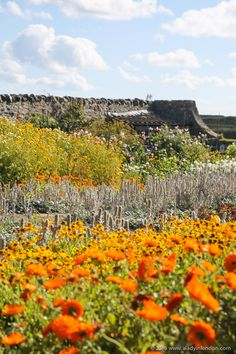 7 enchanting islands to visit in the UK. Holy Island, where Gertrude Jekyll's walled garden at Lindisfarne Castle is located, is one of them.