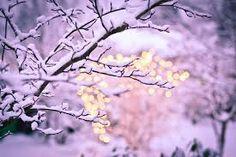 Bildergebnis für winter wonderland tumblr