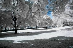 Winter, Snow, Trees, Park, Season, Nature, White, Cold