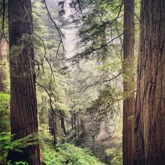 Redwoods North