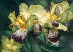Artist Greta Corens: Watercolor Striped Irises