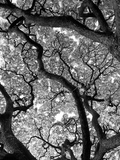 Branches by #Mavele