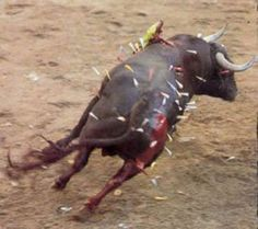 """bull fighting - they think this is a """"sport""""?"""