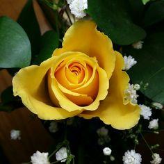 The Yellow Rose by Trish Nicholas