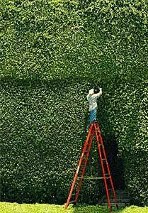 How does he trim the top part?  Moises Esquenazi, Hedges