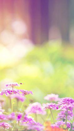 Dreamy Sunshine Bright Flower wallpaper.