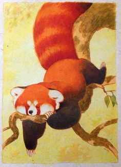 snoozing panda by louve i never did scan this or a lot of upcoming submissions #red #panda