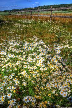 Blomsterengen
