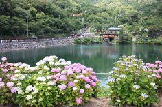形原温泉あじさいの里 | 三河 | 訪日観光客向け観光情報 – ジャパンホッパーズ