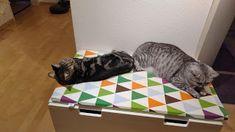 Katzentagebuch: Warum ich mich so lange nicht mehr gemeldet habe