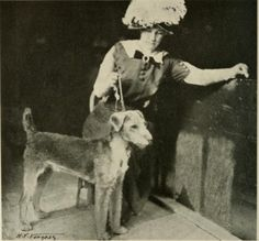 Mrs Crawford c. Welsh Terrier, Airedale Terrier, Best Puppies, Best Dogs, Special Images, Large Dog Breeds, Tier Fotos, Vintage Dog, Mans Best Friend
