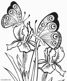 Butterfly Flower Coloring Page Butterfly Flower Coloring Page. butterfly Flower Coloring Page. butterfly Flower Coloring Pages at Getdrawings in butterfly coloring page Butterfly Flower Coloring Page butterfly Free Printable Coloring Pages for Kids Of Butterfly Flower Coloring Page Insect Coloring Pages, Printable Flower Coloring Pages, Butterfly Coloring Page, Easy Coloring Pages, Mandala Coloring Pages, Animal Coloring Pages, Coloring Pages To Print, Coloring Pages For Kids, Coloring Book