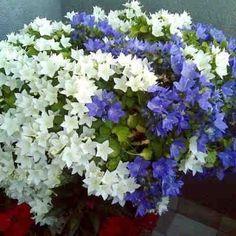 Echa un poco de canela a tus plantas #plantas #abono