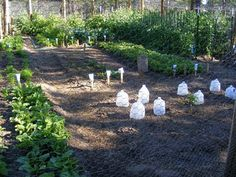 Milk containers for little green houses
