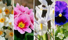 Cool Plants, Plants, Garden, Growing