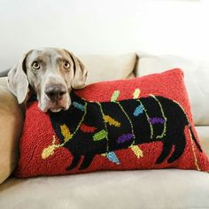 You're a dachshund HARLOW! ❄